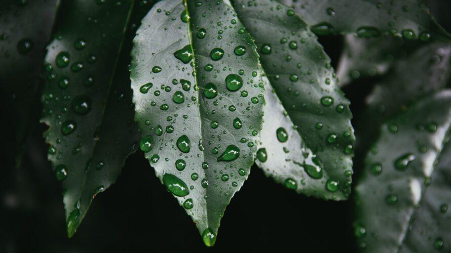 雨はどんなエンタメにも勝る件